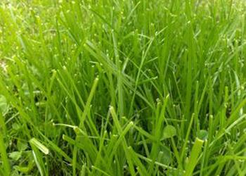 554487_grass_1.jpg