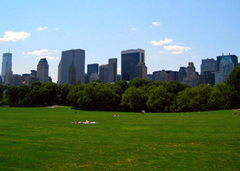 Green space in Central Park, New York City