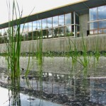 Natural Step US to merge with Cascadia Green Building Council
